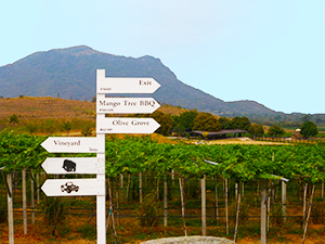 Vineyards Hua Hin Thailand